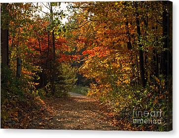 Autumn Nature Trail Canvas Print by Cheryl Cencich