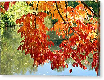 Autumn On The Pond Canvas Print by Jo Sheehan