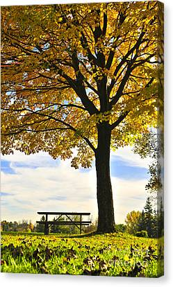 Autumn Park Canvas Print by Elena Elisseeva