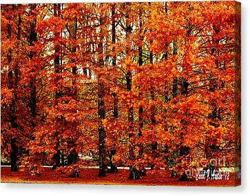 Autumn Red Maple Landscape Canvas Print