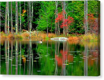 Autumn Reflections Canvas Print by Aron Chervin