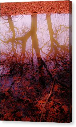 Autumn Reflections  Canvas Print by Xoanxo Cespon