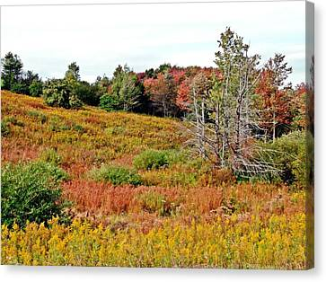 Canvas Print featuring the photograph Autumn Riot by Christian Mattison