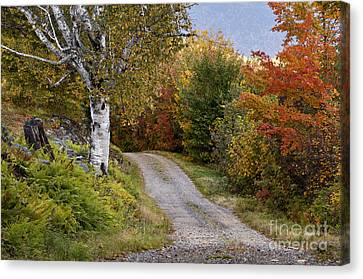 Autumn Road - D005840 Canvas Print by Daniel Dempster