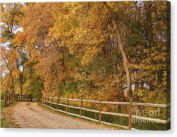 Autumn  Road To The Ranch Canvas Print by James BO  Insogna