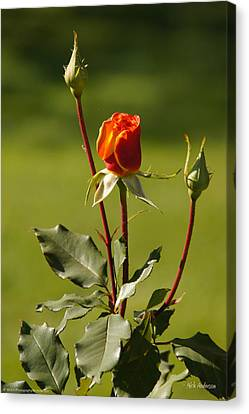 Autumn Rose Canvas Print by Mick Anderson