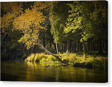 Autumn Scene Of The Little Manistee River In Michigan No. 0880 Canvas Print by Randall Nyhof