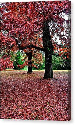 Canvas Print featuring the photograph Autumn by Scott Holmes