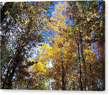 Canvas Print featuring the photograph Autumn by Sheila Silverstein