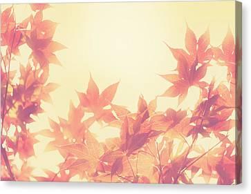Autumn Sky Canvas Print by Amy Tyler