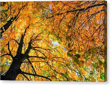 Autumn Sky Canvas Print by Hannes Cmarits