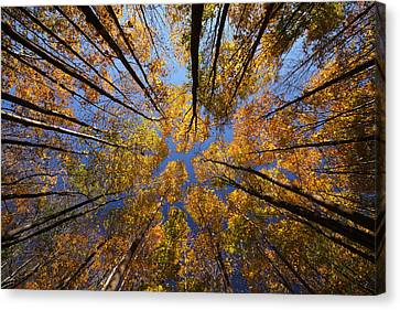 Autumn Sky Canvas Print by Mircea Costina Photography