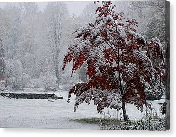 Autumn Snow I Canvas Print by Andrea Simon