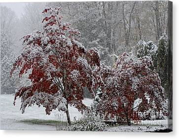 Autumn Snow II Canvas Print by Andrea Simon
