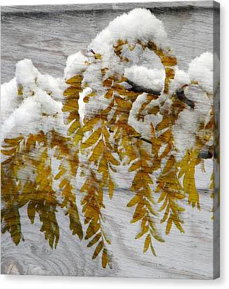 Canvas Print featuring the photograph Autumn Snow by Michelle Frizzell-Thompson