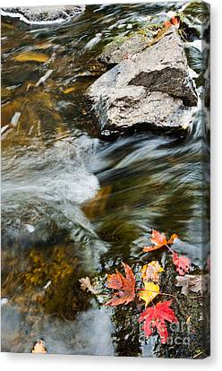 Canvas Print featuring the photograph Autumn Stream by Cheryl Baxter