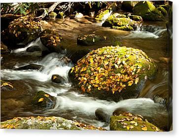 Autumn Stream Canvas Print by Lena Auxier