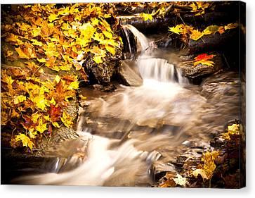 Autumn Stream No 1 Canvas Print by Kamil Swiatek