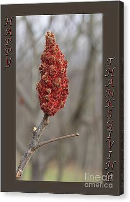 Canvas Print - Autumn Sumac  Thanksgiving Greeting Card #2 by Andrew Govan Dantzler