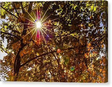 Autumn Sunburst Canvas Print by Carolyn Marshall