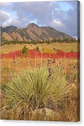 Autumn Sunrise Along The Mesa Trail Canvas Print