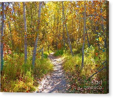 Autumn Trail Canvas Print