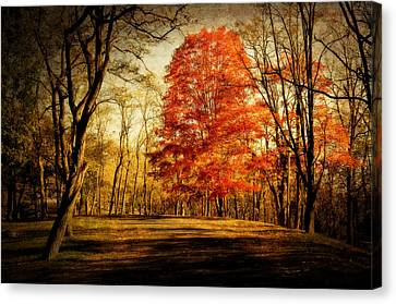 Autumn Trail Canvas Print by Kathy Jennings