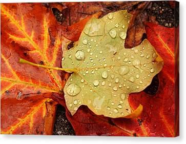 Autumn Treasures Canvas Print by Matthew Green