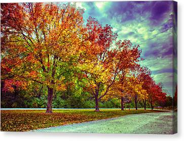 Autumn Tree Line At Busch Canvas Print by Bill Tiepelman