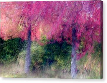 Autumn Trees Canvas Print by Carol Leigh