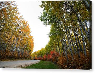 Autumn Trees In Meadow Lake Park Saskatchewan Canvas Print by Mark Duffy