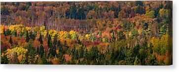 Autumn Trees Panorama Canvas Print by Matt Dobson