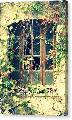 Autumn Vines Across A Window Canvas Print