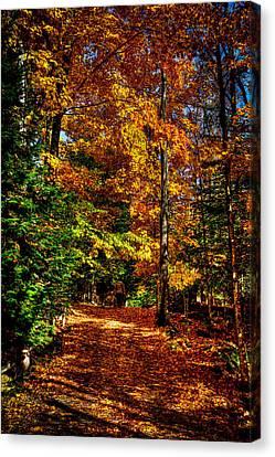 Autumn Walk Canvas Print by David Patterson