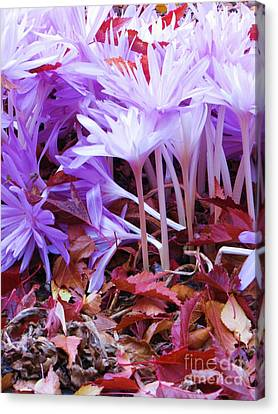 Canvas Print featuring the photograph Autumn Water Lily Crocus by Michele Penner