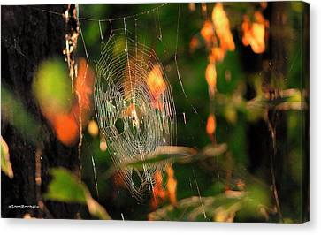 Autumn Web Canvas Print by Sarai Rachel