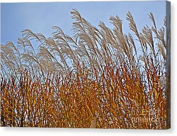 Autumn Wind Through The Grass Canvas Print by Mary Machare