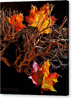 Canvas Print featuring the photograph Autumnal Feelings by Beverly Cash