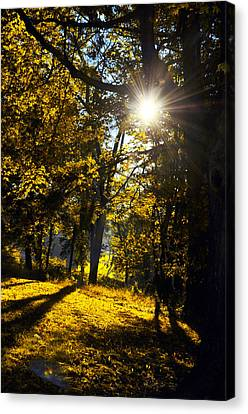 Autumnal Morning Canvas Print by Bill Cannon