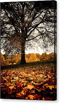 Autumnal Park Canvas Print by Lenny Carter