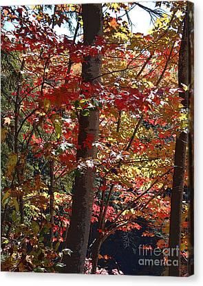 Autumn's Delight Canvas Print by Diane E Berry