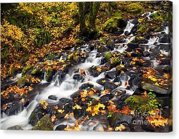Autumn's Staircase Canvas Print by Mike  Dawson
