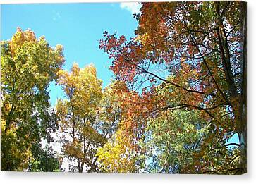 Canvas Print featuring the photograph Autumn's Vibrant Image by Pamela Hyde Wilson