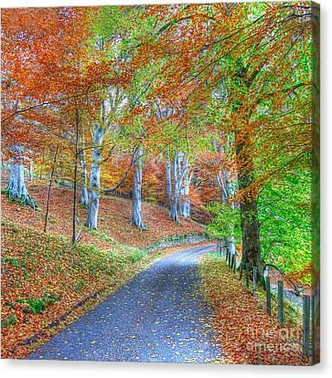 Autumns Way Vert Canvas Print by John Kelly
