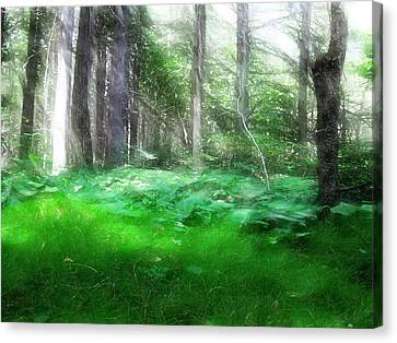 Canvas Print featuring the photograph Avalon Forest Dreamscape by Mario Carini