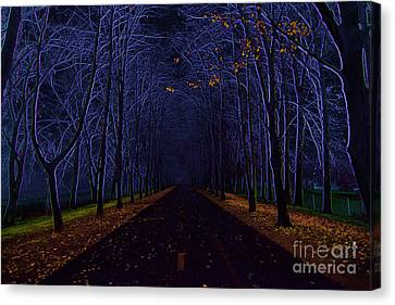 Avenue Of Trees Canvas Print by Michal Boubin
