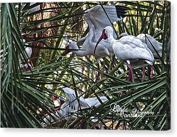 Canvas Print featuring the photograph Aviary by Linda Constant