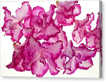 Azalea Abstract Canvas Print by Brad Rickerby