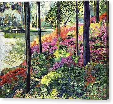 Azalea Forest Grove Canvas Print by David Lloyd Glover