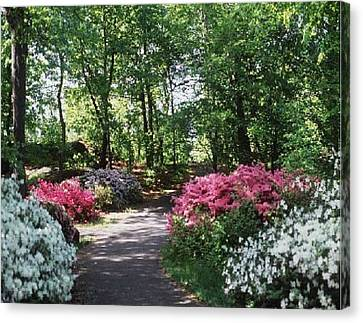 Canvas Print featuring the photograph Azalea Path by Elizabeth Coats